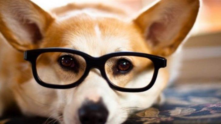 Hayvanlar Arasında En Akıllısı Hangisidir ?